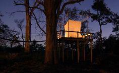 Baumhaus in der Wildnis von Botswana    http://www.tripodo.de/reiseangebot/northern-highlights-deluxe/9657/