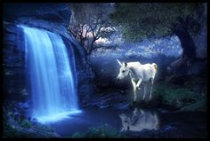 unicorn pictures | Hevosia poneja minihevosia