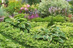 Скромница-хоста открывает огромные возможности для создания стильного сада