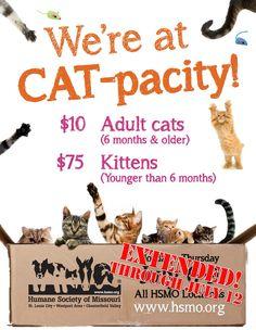 great kitten adoption poster pet adoption marketing ideas pinterest adoption shelter and. Black Bedroom Furniture Sets. Home Design Ideas