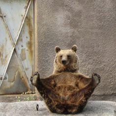 Yoga Routine  #animals #yoga