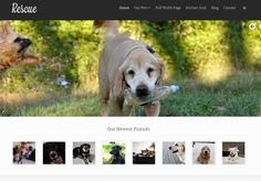 5 WordPress Themes #pet #manufacturers http://pet.remmont.com/5-wordpress-themes-pet-manufacturers/  5 WordPress Themes/Plugins for Petfinder Pet Adoption Sites Many of us have adopted pets in the past. If you are passionate about saving animals, there is no reason you shouldn t build a website to promote the cause. These 5 themes / plugins help you bring your petfinder or pet adoption site online faster: Rescue. an animal shelter theme with Petfinder support. You will be able to sync your…