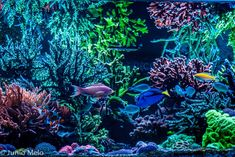 Anybody else fired up about reefing lately? I'm actually down in the tank room cleaning, sweeping, throwing junk away! Coral Tank, Reef Aquarium, Corals, Water Tank, Reef Tanks, Fire, Aquascaping, Aquariums, Sticks