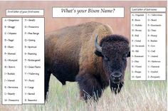 What's your bison name?   I am hereby renamed Majestic Yellowstone