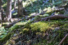Walenpfad - Wanderung von Brunni auf die Bannalp - Engelberg Engelberg, Plants, Wanderlust, Vacation Travel, Planters, Plant, Planting