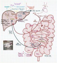 La Chuleta de Osler: Gastroenterología - Hipertensión portal y sus complicaciones