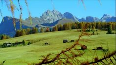 Seiser Alm, Barn, Alpine Hut, Highlights1505, South Tyrol, Mountain Range, Limb (Part of Tree), High Mountain Regions, Conifer, Autumn, Meadow, Collection Gogol Lobmayr, World Natural Heritage, Forest, Travel Destination, No People, Sunshine, Day, Stock Footage,