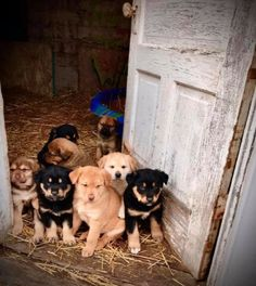 Everyone deserves some unconditional love Great Pyrenees, Humane Society, Rottweiler, Dogs And Puppies, Pets, Animals, Animales, Animaux, Rottweilers
