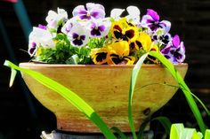 #canon #flowers #flower #petal #petals #nature #beautiful #love #pretty #plants #blossom  #spring #summer #flowerstagram #flowersofinstagram  #flowerslovers #flowerporn #botanical #floral #florals  #flowermagic #instablooms #bloom #blooms #botanical #floweroftheday #likeforlike #followme #follow http://gelinshop.com/ipost/1523872517306767232/?code=BUl4fsNDNeA