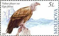 Stamp: Griffon Vulture (Gyps fulvus) (Moldova) (Extinct Birds of Moldova) Mi:MD 593