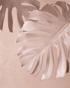 Still Life – Lauren Brady White Aesthetic, Aesthetic Photo, Wabi Sabi, Contemporary Flower Arrangements, Facebook Cover Images, Coffee Bar Home, Still Life Photos, Wallpaper Backgrounds, Paper Flowers