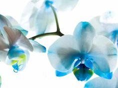 Download 6800 Wallpaper Bunga Anggrek Terbaik