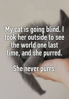 """My cat is going blind. I took her outside to see the world one last time, and she purred. She never purrs."" << I nearly cried"