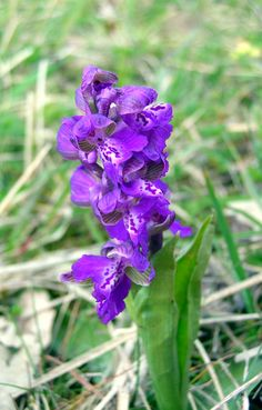 wild orchids!