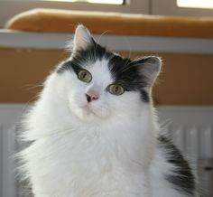 Sanne Cat | Pawshake