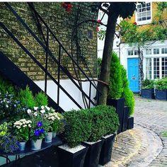 Paradise, Pockets, London, Garden, Instagram Posts, Plants, Garten, Flora, Plant