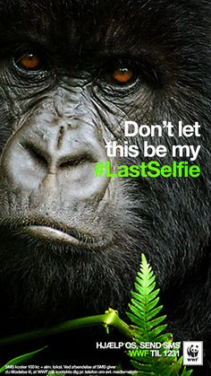 WWF Denmark and Turkey on Snapchat: Don't let this be my #Lastselfie. Endangered animals: Gorilla.
