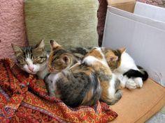 happy_mother_cat_with_kittens-600x450.jpg 600×450 pixels