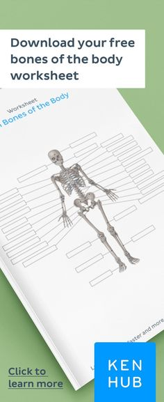 Struggling to learn the of the Start improving your knowledge of right away with our handy worksheets. Facial Bones, Body Bones, Bones And Muscles, How To Study Anatomy, Anatomy Bones, Skeleton Anatomy, Biology Lessons, Human Body Anatomy, Medical Mnemonics