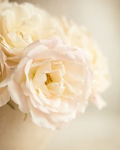 first light of morning roses... soft white romantic garden flowers by leapinggazelle.