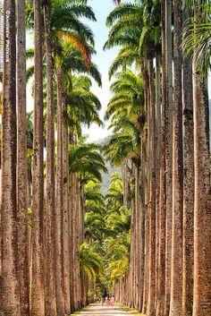 Botanico Imperial Palms, Rio de Janeiro -