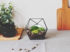 Icosahedron Glass Terrarium Geometric glass container featuring one of the most charming Platonic solids in geometry. Use it as a terrarium near the kitchen window to grow some greenery and enjoy how it shines when the sunlight hits the glass! Unique Headboards, Custom Headboard, Glass Terrarium Containers, Succulent Terrarium, Osb Wood, Tiffany Stained Glass, Diy Home Decor Projects, Decor Ideas, Seasonal Flowers