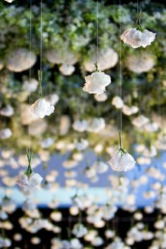 Simple Gorgeous white flowers hanging - Great for hanging from pergola