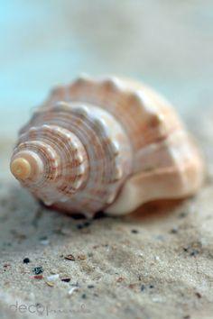 decofriends: Filzmuschel-DIY und Meeresstimmung zu Hause