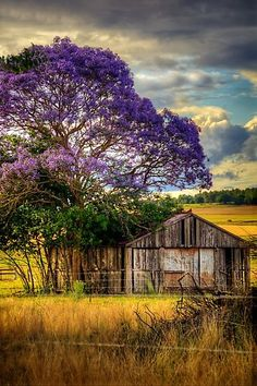 Buy 'Jacaranda' by Tracie Louise as a Poster, Art Print, Canvas Print, Framed Print, Photographic Print, Metal Print, or Greeting Card