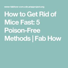 How to Get Rid of Mice Fast: 5 Poison-Free Methods | Fab How