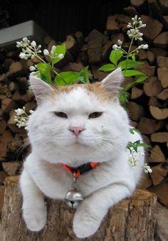 うつぎのはな I Love Cats, Cute Cats, Kittens Cutest, Cats And Kittens, Natsume Yuujinchou, Handmade Stamps, Shiro, Neko, Outdoor Life