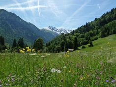 Über den Kanzelwandsattel von Oberstdorf ins Kleinwalsertal Allgäu.  Hier geht's zur Tour: http://www.outdooractive.com/de/mountainbike/allgaeu/ueber-den-kanzelwandsattel-von-oberstdorf-ins-kleinwalsertal/3174151/#axzz28gMDslDw