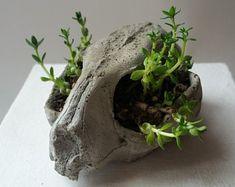 Cat skull bones creepy cute cement cactus and succulent bonsai planter witch goth