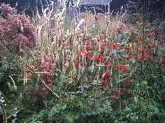 meadow planting oudolf - Google Search