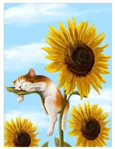 Summer Dream Painting by Veronica Minozzi - Summer Dream Fine Art Prints and Posters for Sale Gato Gif, Image Chat, Dream Painting, Sleeping Kitten, Illustration Art, Illustrations, Sunflower Illustration, Paint By Number Kits, Animation