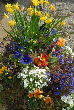 6 Beautiful Hanging Flower Basket Ideas: Springtime Abundance