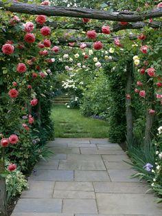 duftige rosen über dem gartenweg