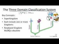 An Introduction to Taxonomy - The Kingdoms and Domains Of Life | HubPages