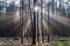Unterwegs in der Dresdner Heide im Winter, Portfolio von Waldfotos in der kühlen Jahreshälfte // portfolio of photography, German forest in winter, light and snow