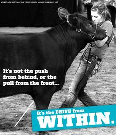 showing cattle quotes - Google Search