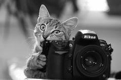 Cat + Camera <3