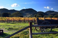 The Characters of Wine Country: An Insider's View — The Bold Italic — San…