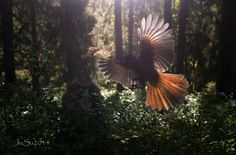 flying friend in the forest