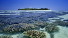 Australia's Heron Island: A Canary In The Coal Mine For Coral Reefs?