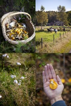 Wild mushroom hunting | Wild Foods | Wild food forage| Wild food ideas | #wildfood #foraging www.foragekitchen.com
