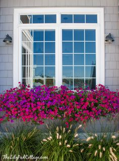 Window Boxes by the Lilypad Cottage. Wave petunias planted in May. Great photos of before. Petunia Tattoo, Window Box Flowers, Window Box Fall, Fall Flower Boxes, Railing Flower Boxes, Balcony Flower Box, Window Planter Boxes, Window Box Plants, Planter Ideas