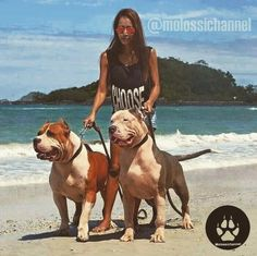 Like your dogs they are really big. Bully Xl, Bully Pitbull, Huge Dogs, Giant Dogs, Amstaff Terrier, Pitbull Terrier, Bulldog Puppies, Dogs And Puppies, Dog Pounds