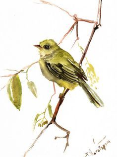 Olive Flycatcher original watercolor painting 12 X by ORIGINALONLY, $30.00