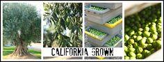 CA Grown!