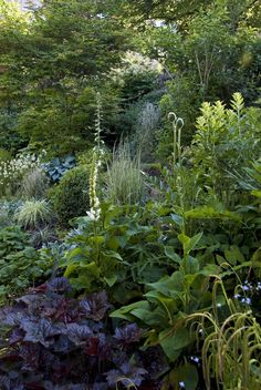 Mixed border in the morning light  An impression from our garden. This border combines ornamental grasses with broadleaved perennials.